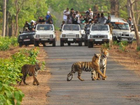 Entdecken Sie auf Ihrer Abenteuertour auch die wilde Seite von Indien