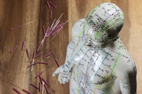 Akupunkturmodell eines Heilpraktikers