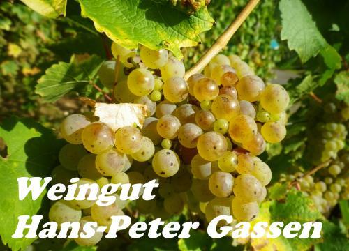 Firmenprofil von: Weingut Hans-Peter Gassen in Zell